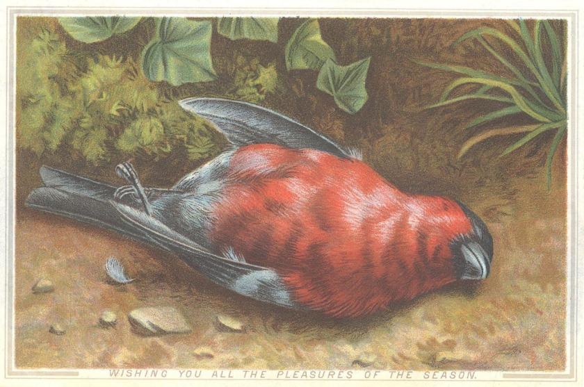 c149deadbird