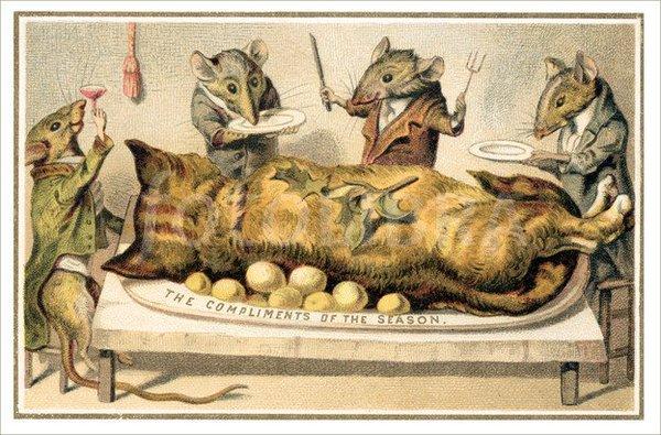 rats dead cat